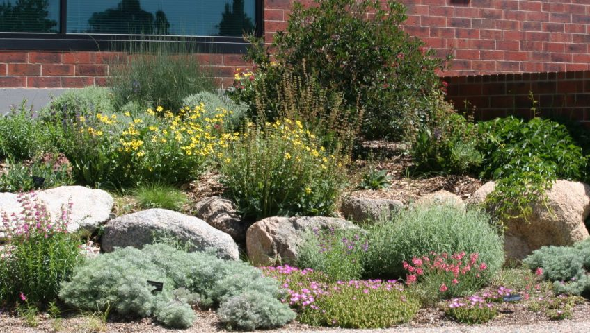 xeriscape yard showing colourful plants and rocks for interest